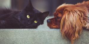 Une ville chinoise interdit la consommation de chiens et de chats