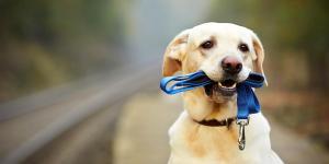 Les agences de location canine fleurissent un peu partout